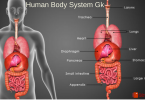 Human body parts- General knowledge question with answers