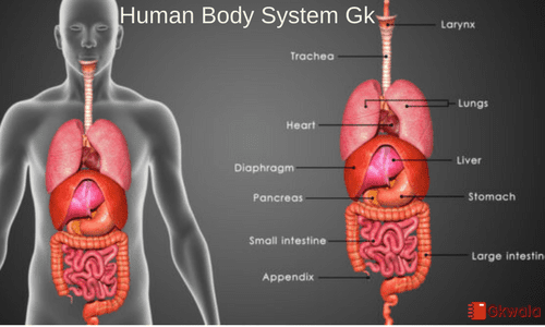 Human body parts- General knowledge question with answers - Gkwala